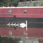 Red barge with swans